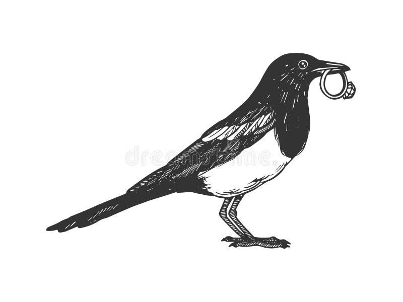 Sroka ptak z złotym ringowym rytownictwo wektorem royalty ilustracja
