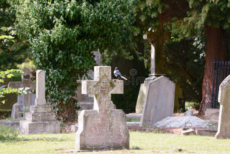 Sroka umieszczająca na gravestone krzyżu obrazy royalty free