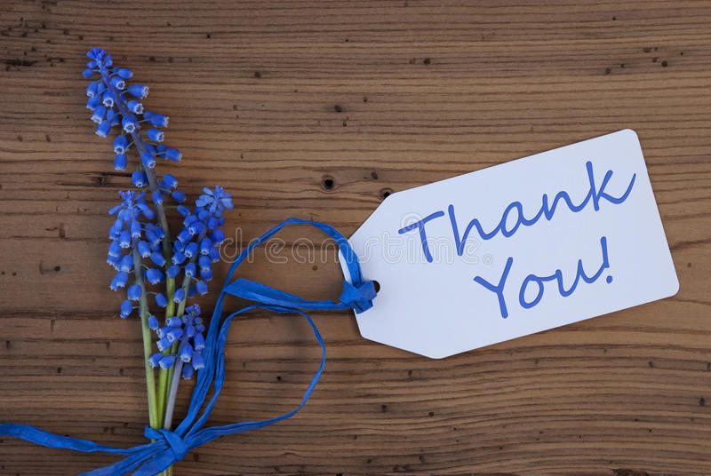 Srping Grape Hyacinth, Label, Thank You. Label With English Text Welcome. Blue Spring Grape Hyacinth With Ribbon. Aged, Rustic Wodden Background. Greeting Card royalty free stock photos