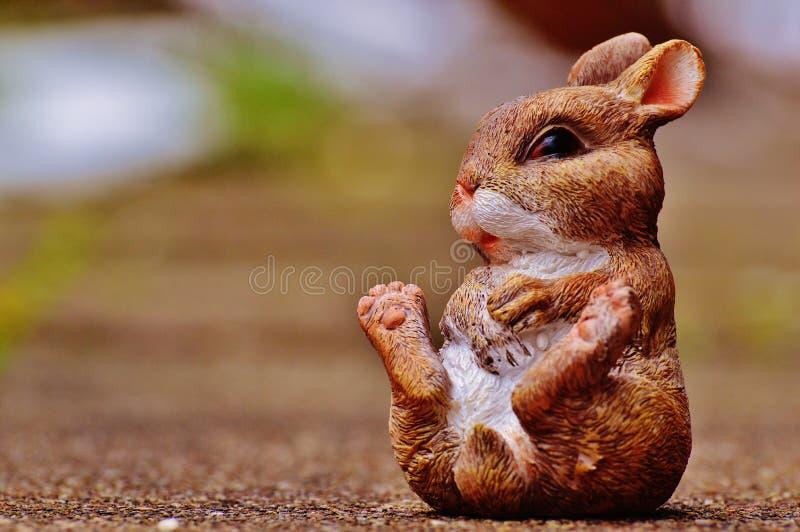 Ssak, fauna, królik, bokobrody zdjęcia stock
