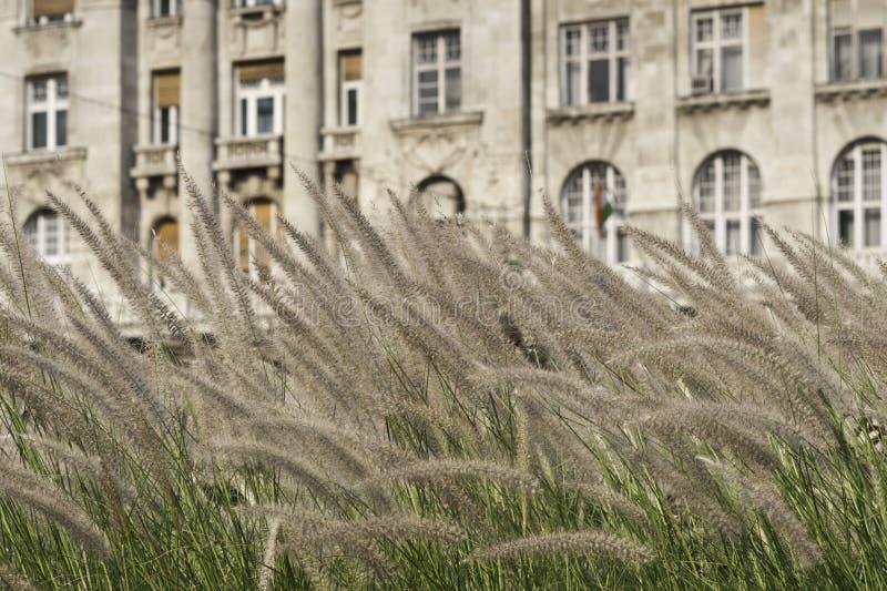 Städtische Gartenarbeit lizenzfreie stockbilder