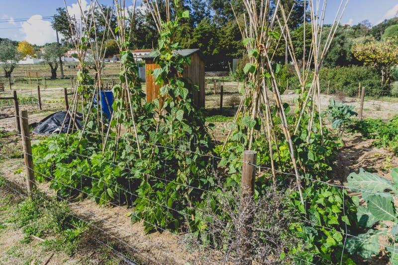 Städtische Gartenarbeit Urbanisierter Gemüsegarten der Stadt Wachsen, farmi lizenzfreie stockbilder