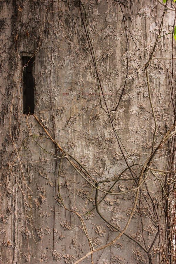 Städtische Hintergrundschmutz-Wandbeschaffenheit stockfoto