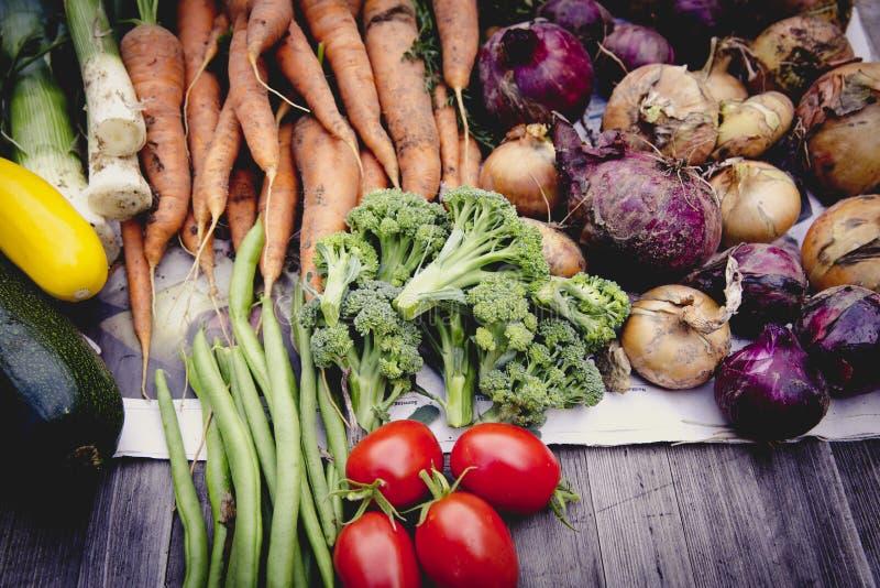 Städtische im Garten arbeitende Gemüseernteernte lizenzfreies stockfoto