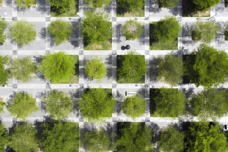 Städtischer Park Bäume und Pflasterung in den Schach-Quadraten lizenzfreie stockfotografie