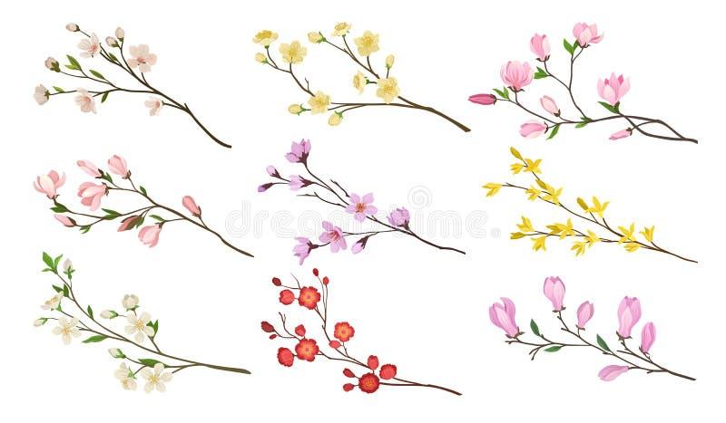 Ställ in av att blomma filialer av fruktträd Ris med blommor och gröna sidor Trees som växer från laken, bevattnar Detaljerade pl vektor illustrationer
