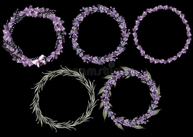 Ställ in av 5 blommor för vattenfärgkranslavendel på vit bakgrund royaltyfri bild