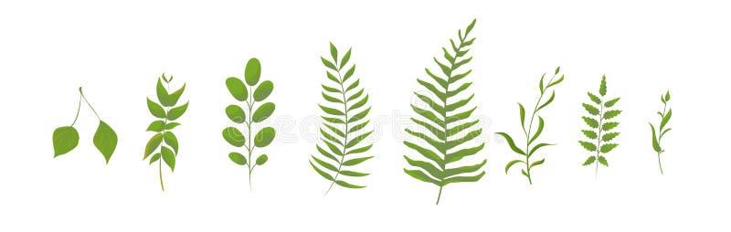 Ställ in av den isolerade naturliga sidasamlingen av den gröna skogormbunken, tropisk gräsplan vektor vektor illustrationer