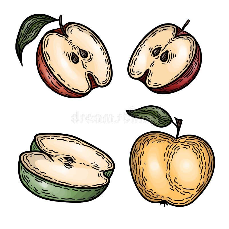 Ställ in av färgrikt av äpplen i den inrista stilen som isoleras på vit stock illustrationer
