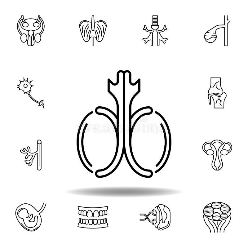 ställ in av för testikelöversikt för mänskliga organ symbol Tecknet och symboler kan anv?ndas f?r reng?ringsduken, logoen, den mo vektor illustrationer