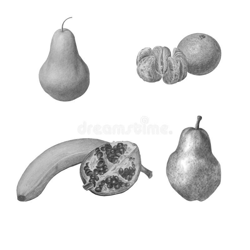Ställ in av frukter i olika positioner, isolerat på vit Svartvit härlig blyertspennaillustration fotografering för bildbyråer