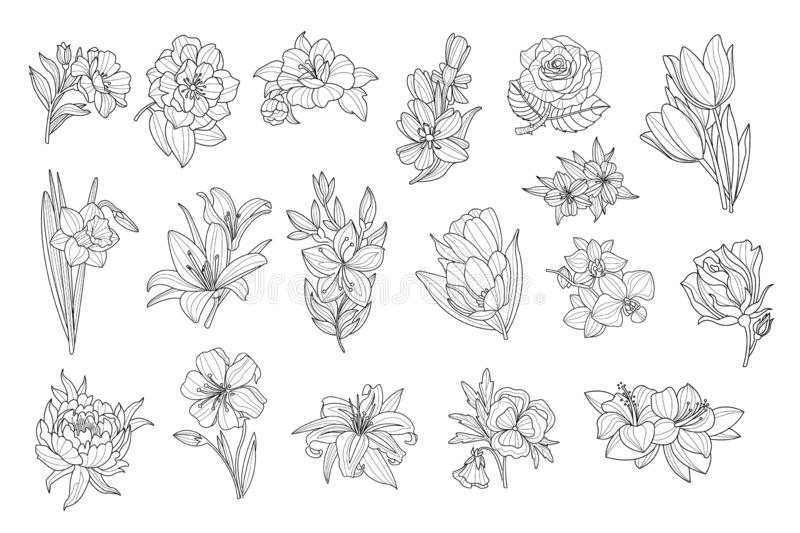 Ställ in av härliga monokromma blommor Lilja tulpan, pion, ros, påsklilja, calendula, pensé, petunia sketchy symboler Hand stock illustrationer