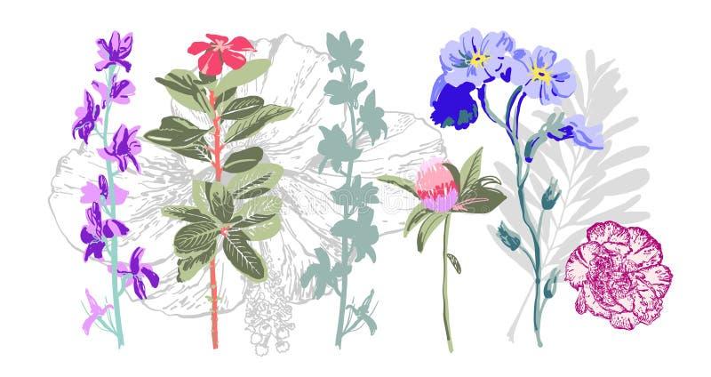 Ställ in av handen som drar botaniska blom- beståndsdelar - lösa blommor royaltyfri illustrationer