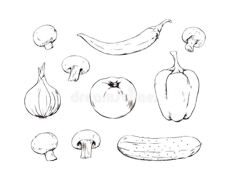 Ställ in av handen som utdragna grönsaker skissar, tomaten, gurkan, peppar, löken och champinjoner royaltyfri illustrationer