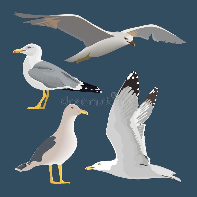 Ställ in av 4 havsfiskmåsar Sväva skjuta i höjden som står, med vikta vingar, att vila som är nyfiket Att flyga mew lång hals, vi vektor illustrationer