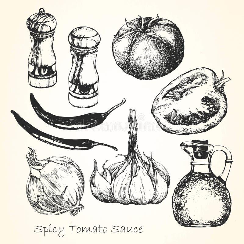 Ställ in av ingredienser för en kryddig tomatsås tecknade kvinnor för framsidahandillustration s vektor vektor illustrationer
