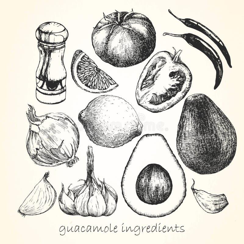 Ställ in av ingredienser för Guacamole tecknade kvinnor för framsidahandillustration s vektor vektor illustrationer