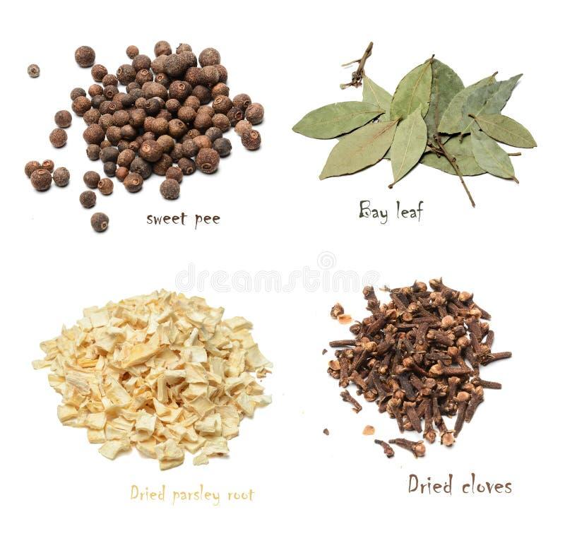 Ställ in av kryddor av fyra variationer på en vit isolerad bakgrund fotografering för bildbyråer