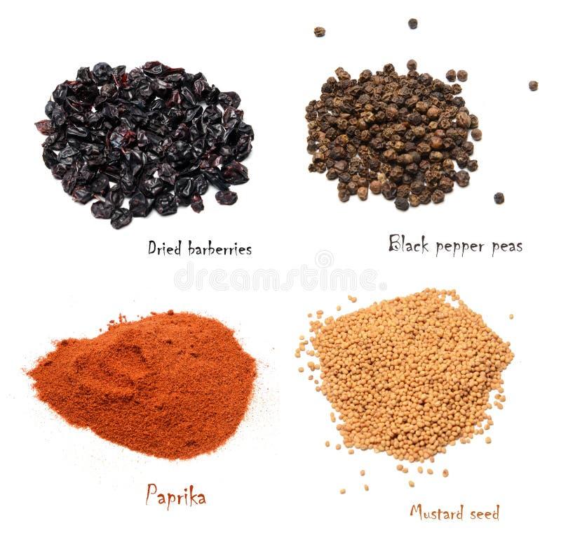 Ställ in av kryddor av fyra variationer på en vit isolerad bakgrund royaltyfri fotografi