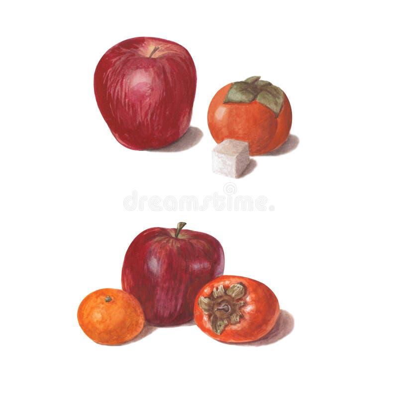 Ställ in av ljusa vattenfärgfrukter Röda äpplen med persimonet, socker och mandarinen som isoleras på vit bakgrund royaltyfri illustrationer