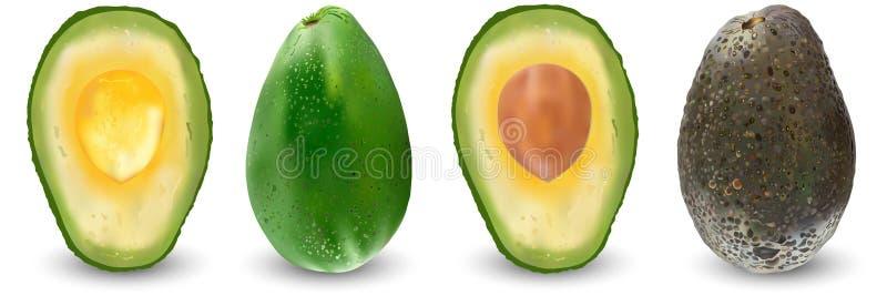 Ställ in av mogna realistiska frukter av avokadot också vektor för coreldrawillustration Exotiska vintergröna fruktväxter Isoleri stock illustrationer