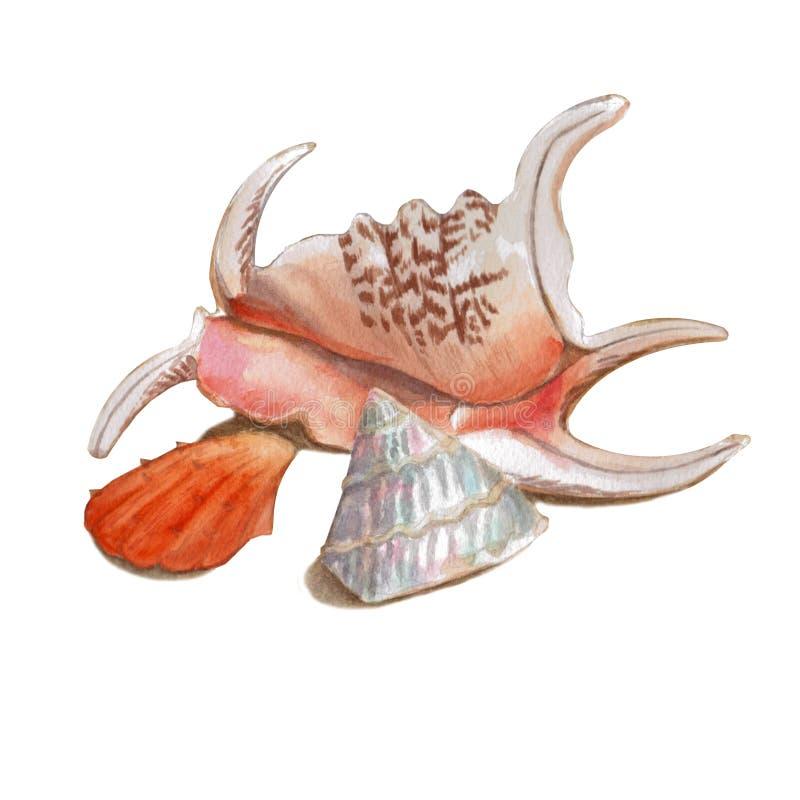 Ställ in av olika färgrika snäckskal som isoleras på en vit bakgrund Härlig vattenfärgillustration på det marin- temat stock illustrationer