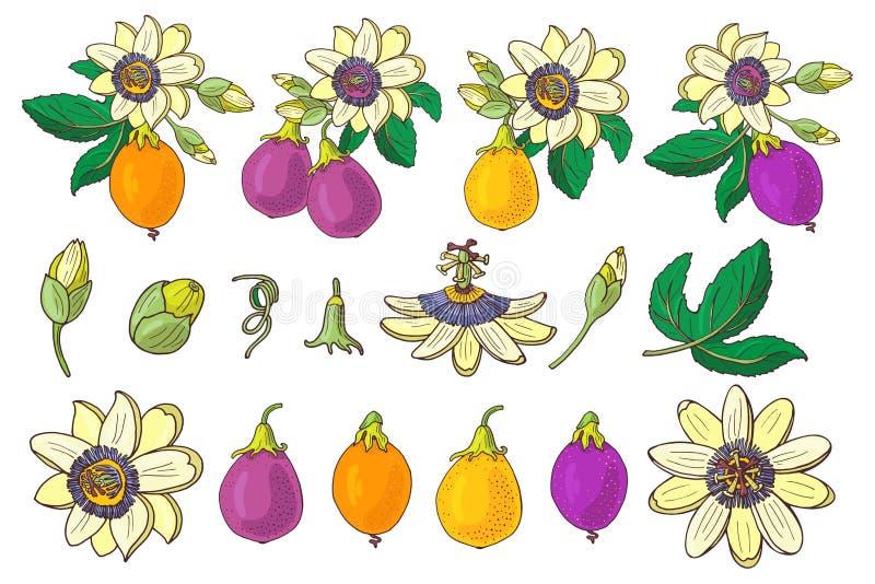 Ställ in av passionsblommapassiflora, purpurfärgad, violett gul tropisk frukt på en vit bakgrund Isolerat exotiskt stock illustrationer