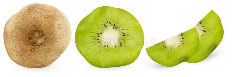Ställ in av realistisk kiwi från olika vinklar, isolerat på vit bakgrund Användbara frukter för vektorillustration, vitaminer stock illustrationer