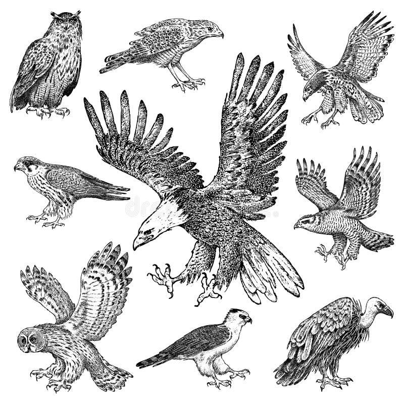 Ställ in av realistiska fåglar Goshawk-, Griffon gam, glåmig engelsk harhund, svart drake, uggla och örn Skissar den utdragna vek royaltyfri illustrationer