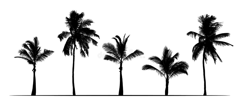 Ställ in av realistiska konturer av palmträd Isolerat på vit bakgrund, vektor royaltyfri illustrationer
