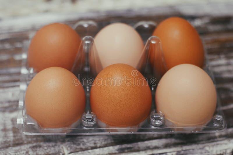 Ställ in av sex nya bruna ägg på den klara plast- asken Tr? bordl?gga bakgrund royaltyfri bild