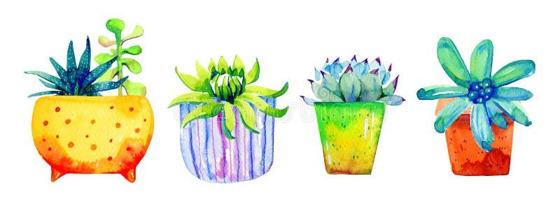 Ställ in av suckulenter i blomkrukor Skissar utdragen färg för vattenfärghanden illustrationen arkivbilder