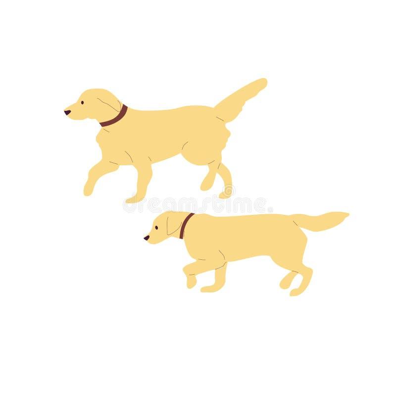 Ställ in av två gå labrador retriever hundkapplöpning bakgrund isolerad white Plan vektor för stiltecknad filmmateriel stock illustrationer