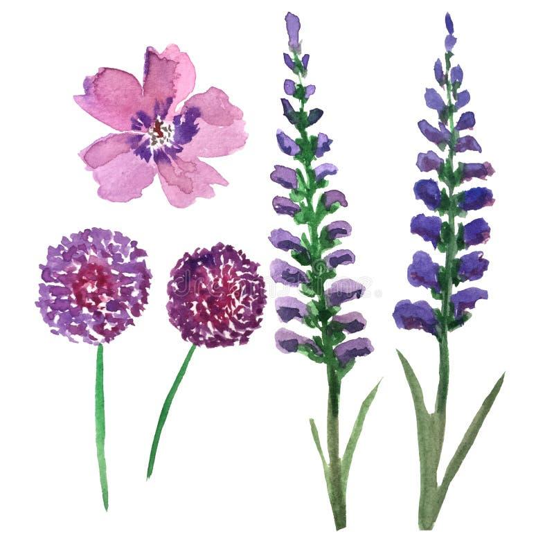Ställ in av vattenfärgblommor i violetta skuggor - Alleum, lavendel och lösa blommor stock illustrationer