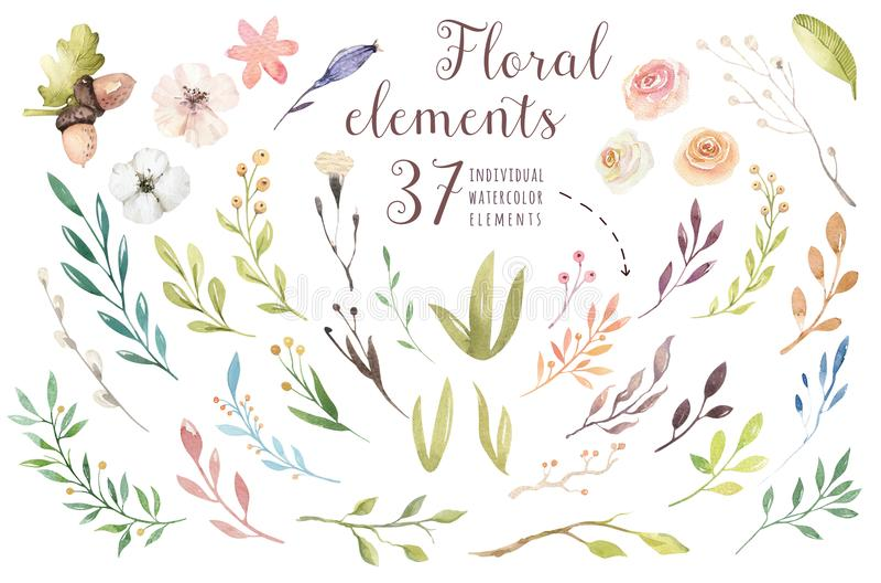 Ställ in beståndsdelar för tappningvattenfärggräsplan av trädgårds- och lösa blommor för blommor, sidor, filialblommor, illustrat royaltyfri illustrationer