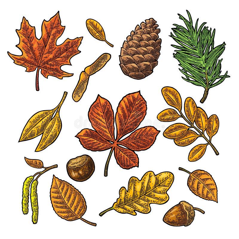 Ställ in bladet, ekollonen, kastanj och kärna ur Inristad vektortappningfärg stock illustrationer