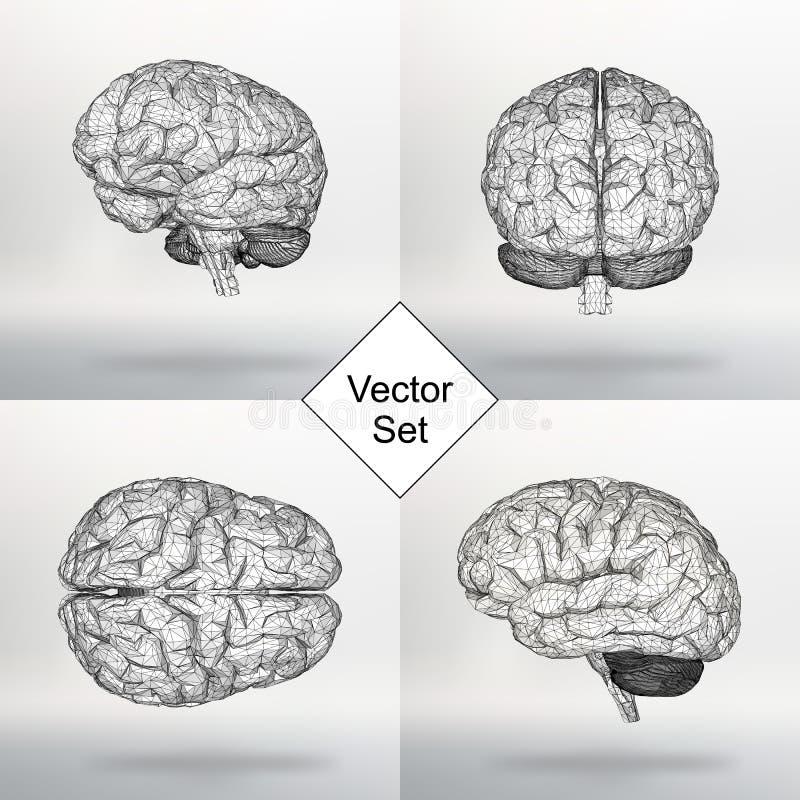 Ställ in den mänskliga hjärnan för vektorillustrationen Det strukturella rastret av polygoner Abstrakt idérik begreppsvektorbakgr stock illustrationer
