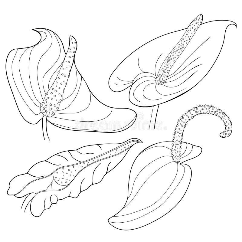 Ställ in färgläggning är anthuriumblommaflamingo också vektor för coreldrawillustration stock illustrationer