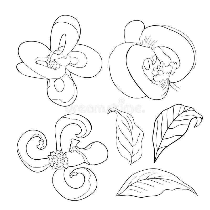 Ställ in färgläggning med illustrationen för vektorn för den Florida skogskornellblomman vektor illustrationer