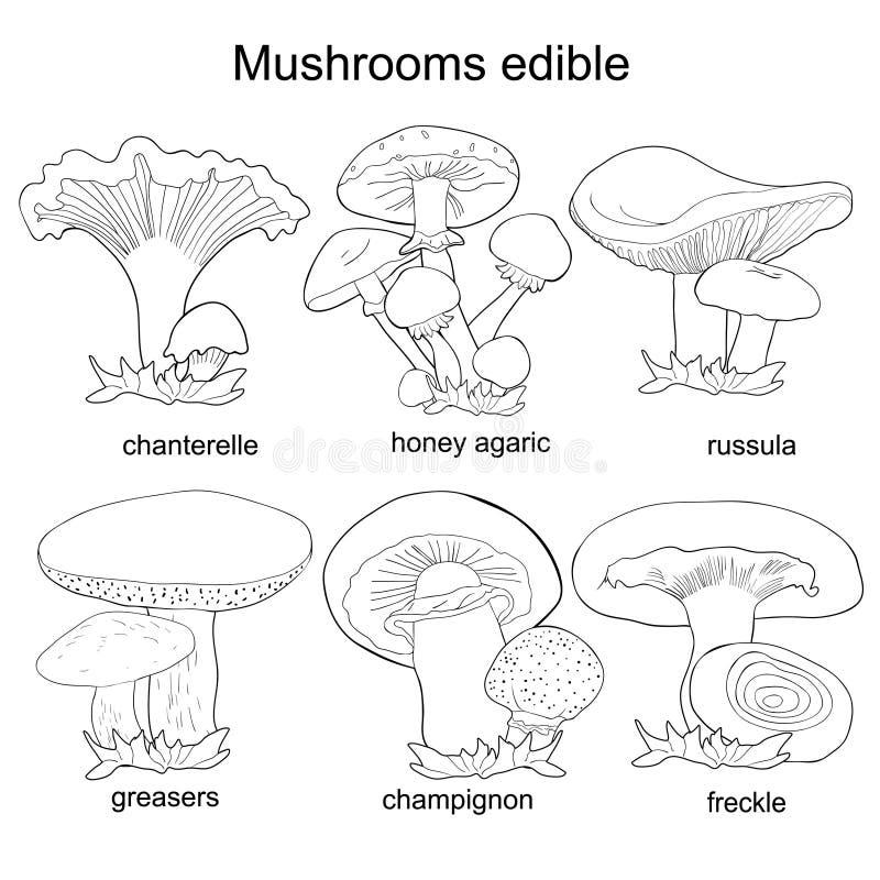 Ställ in färgläggningchampinjoner russulaen, kantarellen, champignonen, fett stock illustrationer