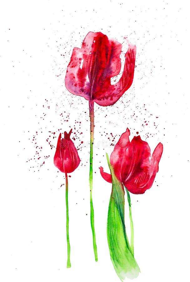 Ställ in från röda tulpan bland abstrakta droppar Vattenf?rgillustration som isoleras p? vit bakgrund arkivbilder
