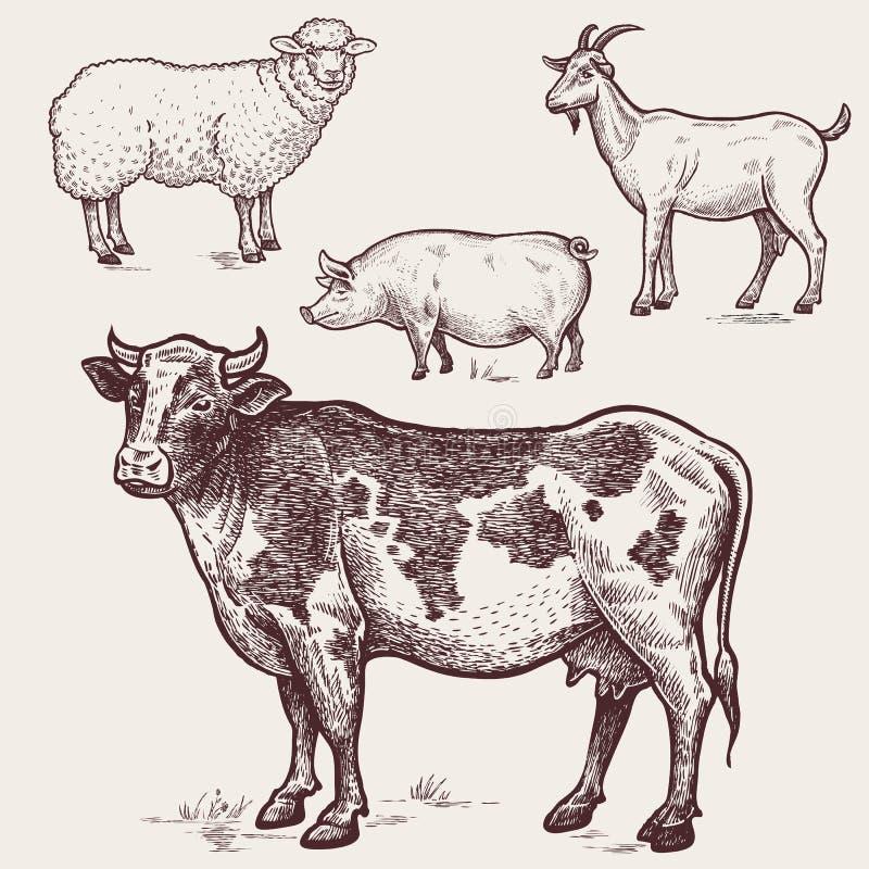 Ställ in höns - kon, fåret, svinet, get djurlantgårdliggande sommar för många sheeeps arkivfoto