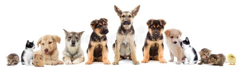 Ställ in husdjur royaltyfria bilder