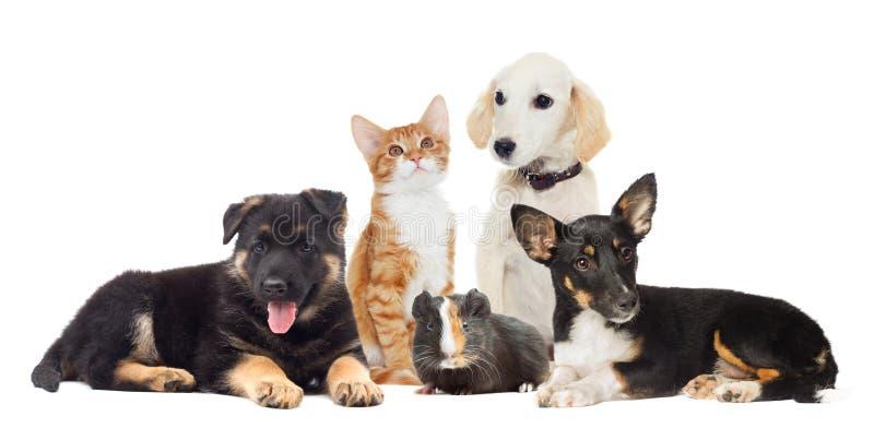 Ställ in husdjur fotografering för bildbyråer