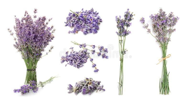 Ställ in med aromatisk ny lavendel arkivbilder