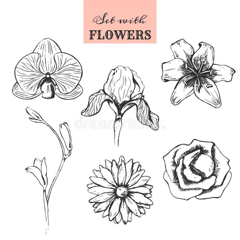 Ställ in med handen drog blommor vektor illustrationer