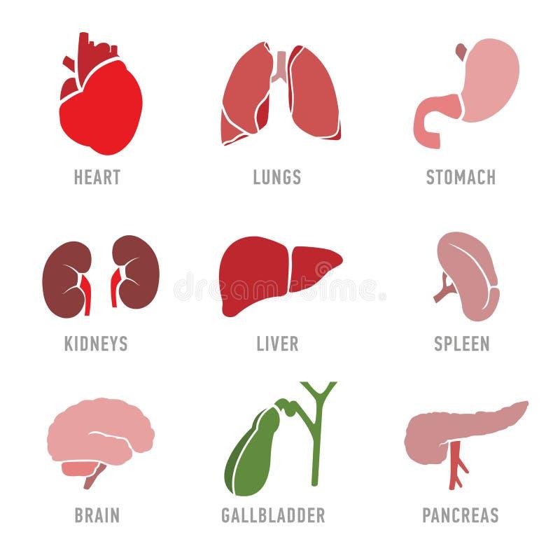 Ställ in med symboler av mänskliga organ vektor royaltyfri illustrationer