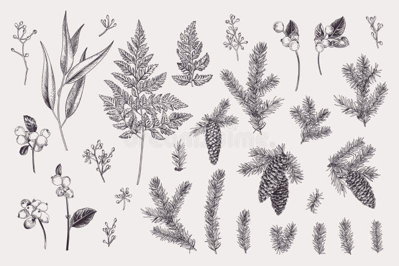 Ställ in med vinterväxter stock illustrationer