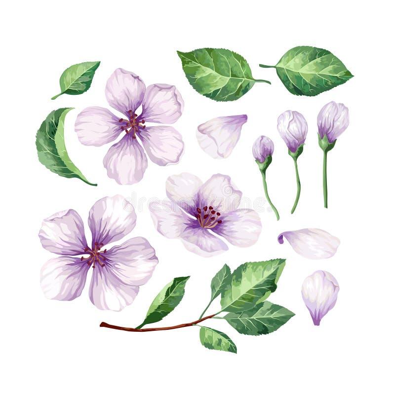 Ställ in, samlingen av Apple blommor, kronblad och sidor som isoleras på vit bakgrund royaltyfri illustrationer