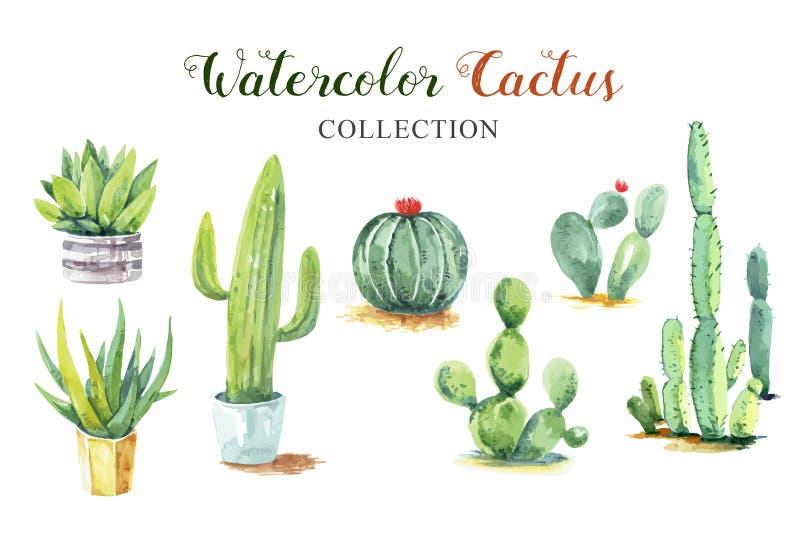 Ställ in samlingen för vattenfärgen för kaktushandmålarfärg stock illustrationer